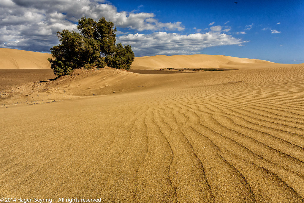 Dunes from Play del Ingles
