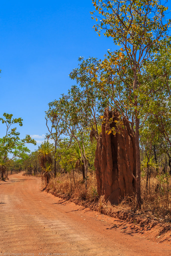 Termite hill on the dirty road